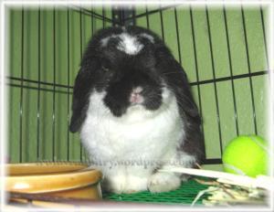 Still my heart bunny regardless