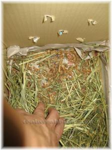 Woody Pet Litter Bedding, Hay & More Hay?