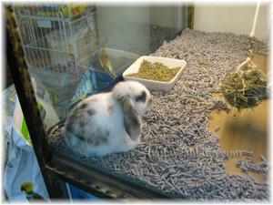 The Tri-Color Lop