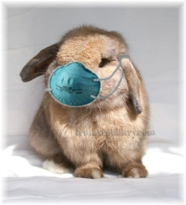 Wear Your Masks Everybun!