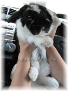 """Hugging the little """"teddy"""" in the car"""