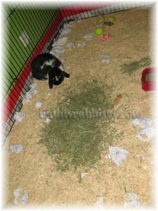 We've got hay in here too!!!