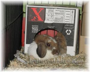 All snuggled up in the FujiXerox hiding box - LOL!