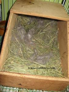 Nice nest!