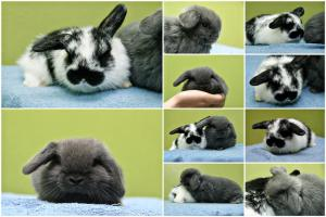 Baby buns collage