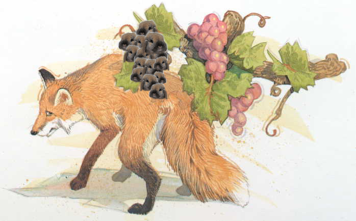 fox and grapes story in english pdf