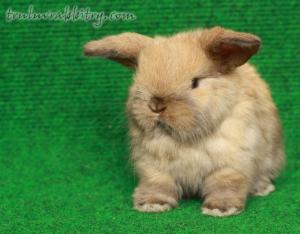 The next generation of Tru-Luv rabbits!