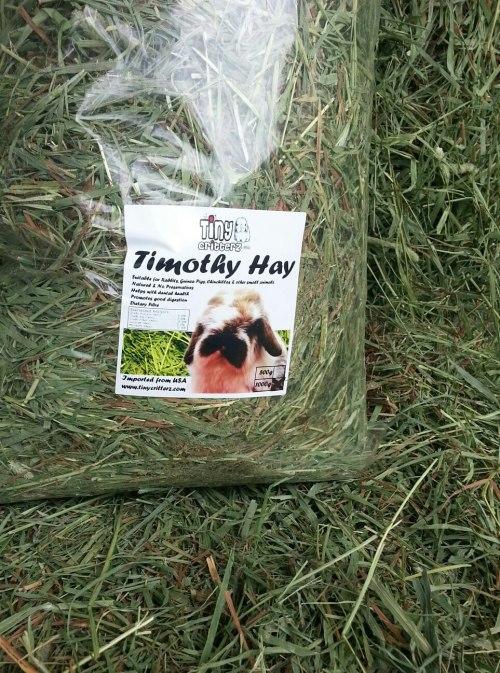 TCTimothyHay