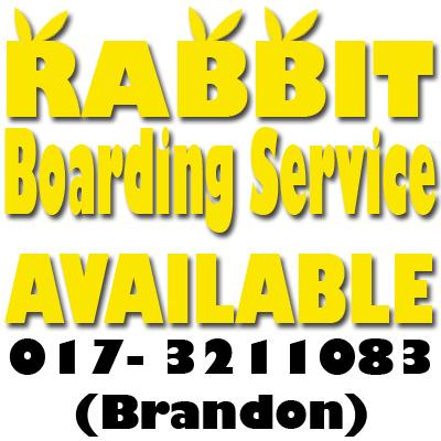 RabbitBoarding