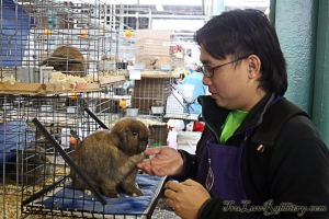 It will not be complete without a picture with my favorite breed - The Holland Lop!