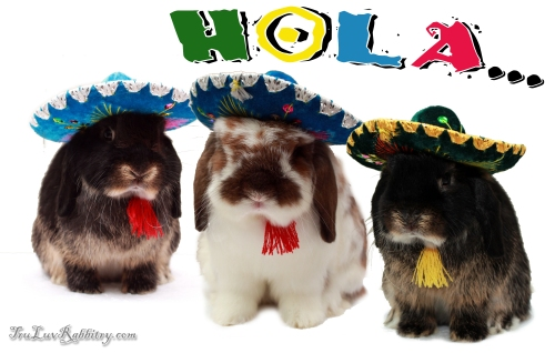 mexicanholland
