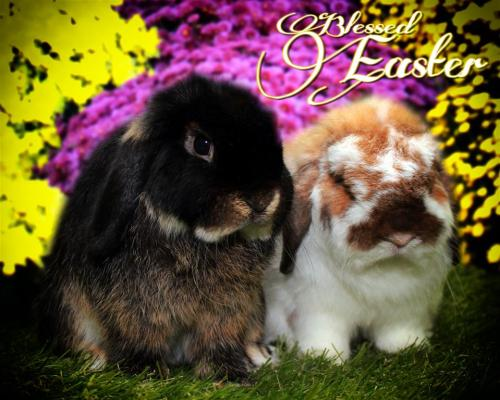 Easter1 (Medium)