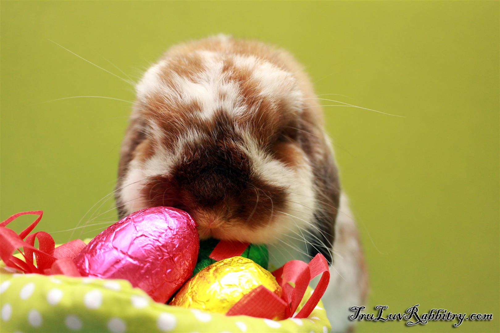 Secondly, if you get me as a pet this Easter, please love me forever...